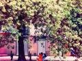 underthetree-jpg